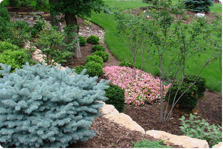 landscaping photo 10